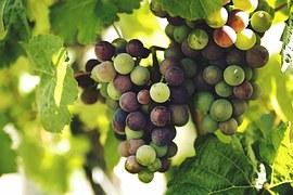 grappolo-uva-bicolore