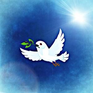 dove-747598_960_720