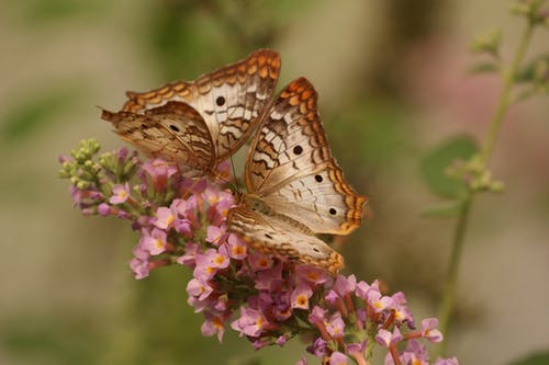 This image has an empty alt attribute; its file name is butterfly-macro-insects-nature.jpg